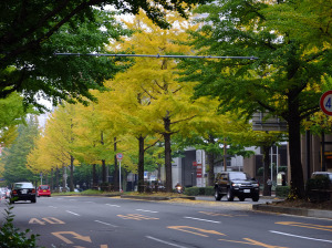 Sendai has many beautiful tree lined promenades