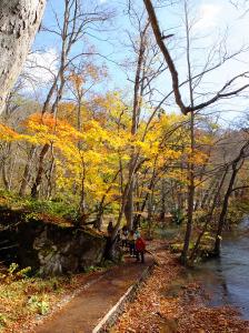 The trail runs alongside the stream